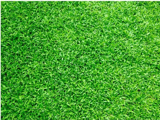 4 Ways To Maintain Your Turf in Penrith
